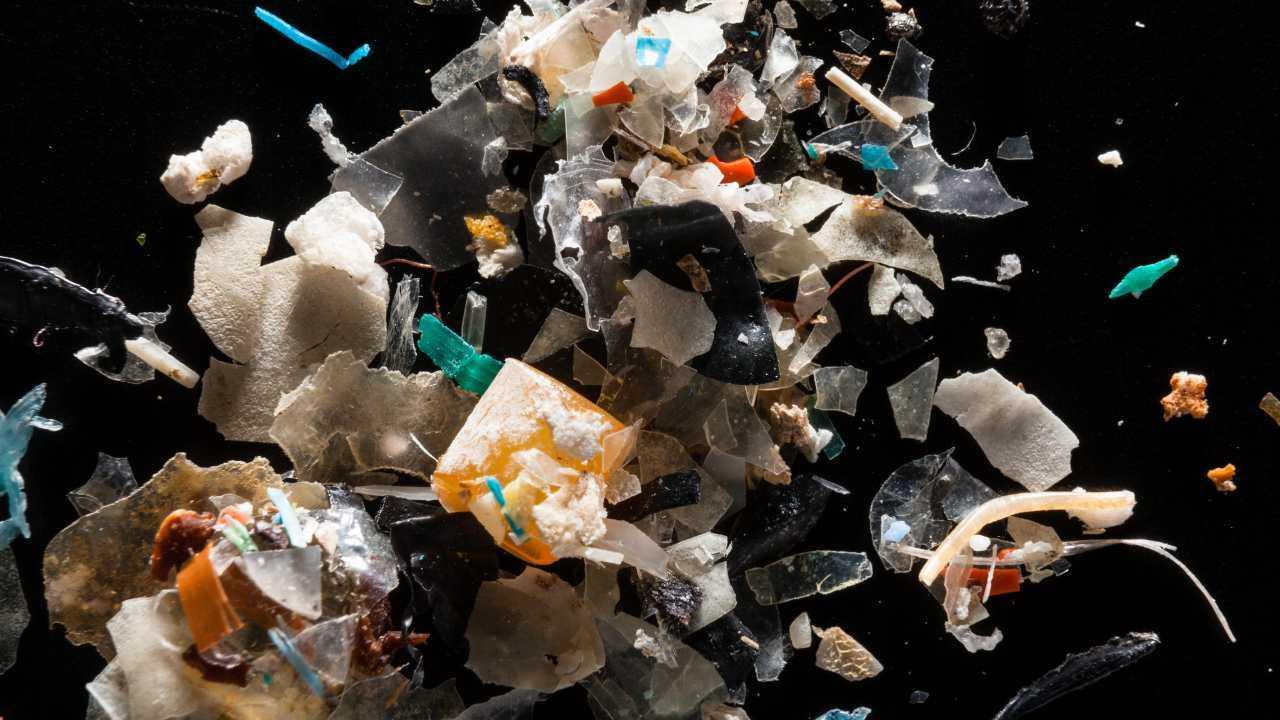 De nombreuses espèces de poissons, y compris celles qui sont consommées par les humains, mangent du plastique