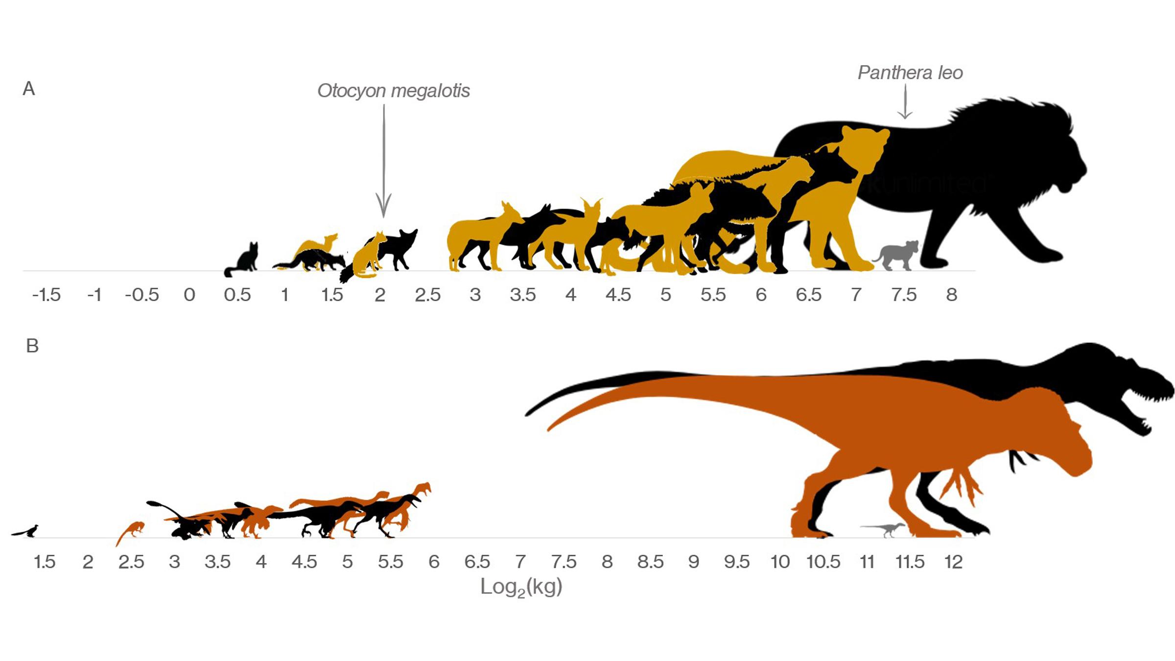L'espace de dinosaure de taille moyenne manquant dans la formation de Dinosaur Park en Alberta, au Canada, par rapport à la taille des mammifères carnivores modernes du parc national Kruger en Afrique du Sud.  Remarquez les nourrissons gris par les plus gros animaux, pour montrer combien il leur fallait pour grandir avant l'âge adulte.