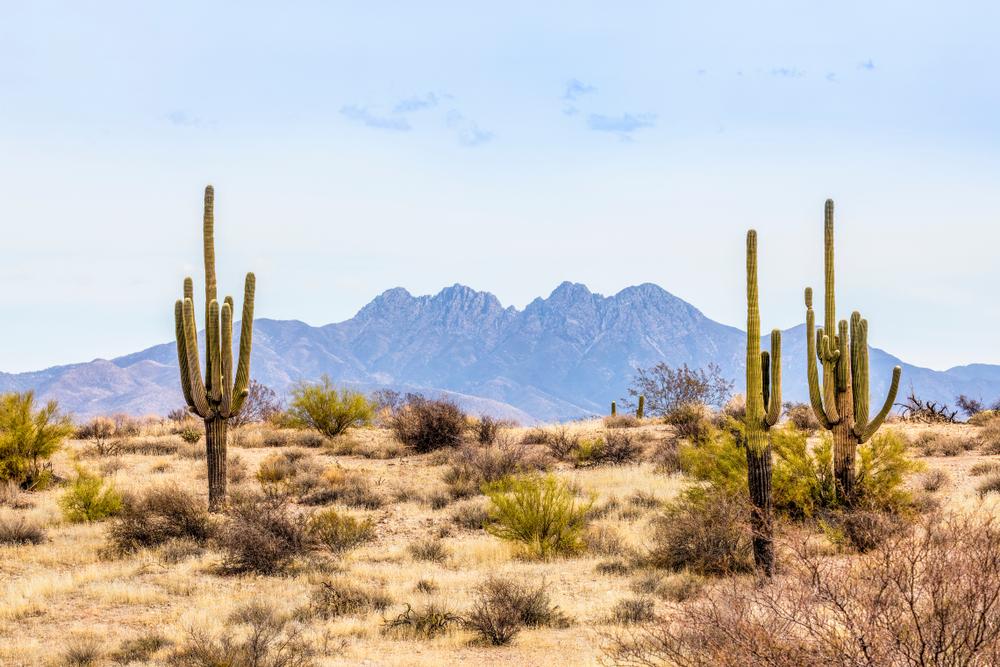 Cactus Saguaro en face des montagnes Mazatzal à Pheonix, Arizona.