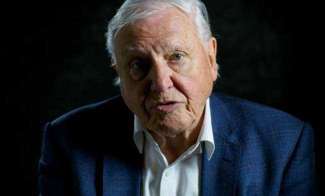 Sir David Attenborough a tout vu.  Crédit: PA