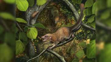 L'ancêtre Primat De Tous Les Humains A Probablement Erré Avec