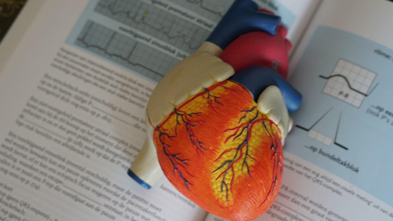 Décodé Comment la maladie COVID19 cause des lésions du muscle cardiaque affecte la fréquence cardiaque