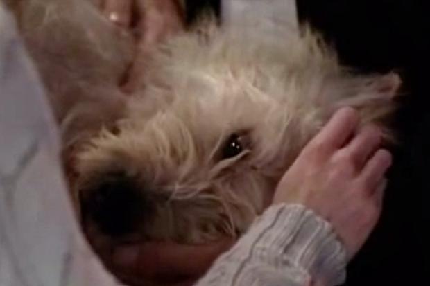 """Mer et Derek ont sacrifié Doc en """"L'anatomie de Grey"""" (Photo: ABC)"""