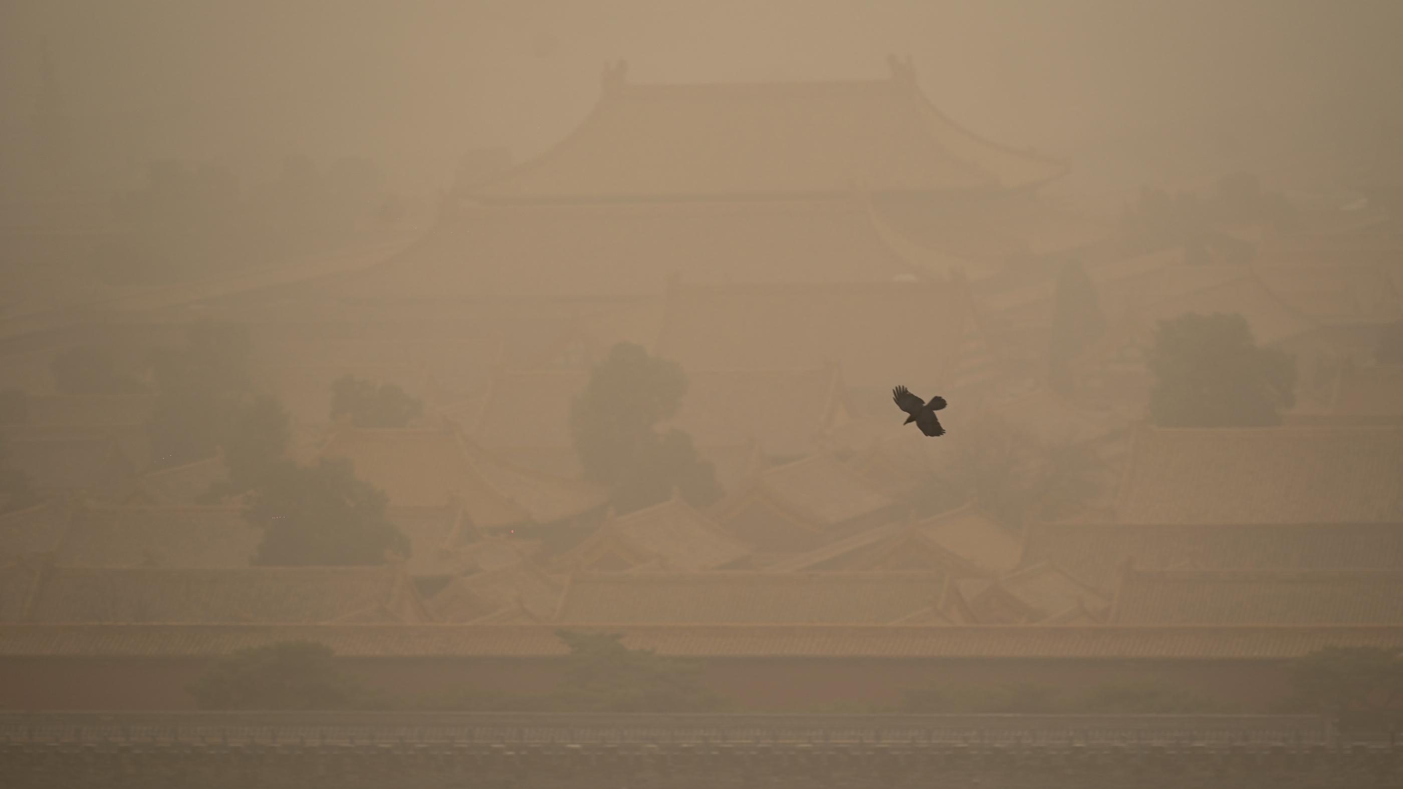 Un corbeau vole à travers la poussière épaisse au-dessus du Palais de la Cité Interdite.