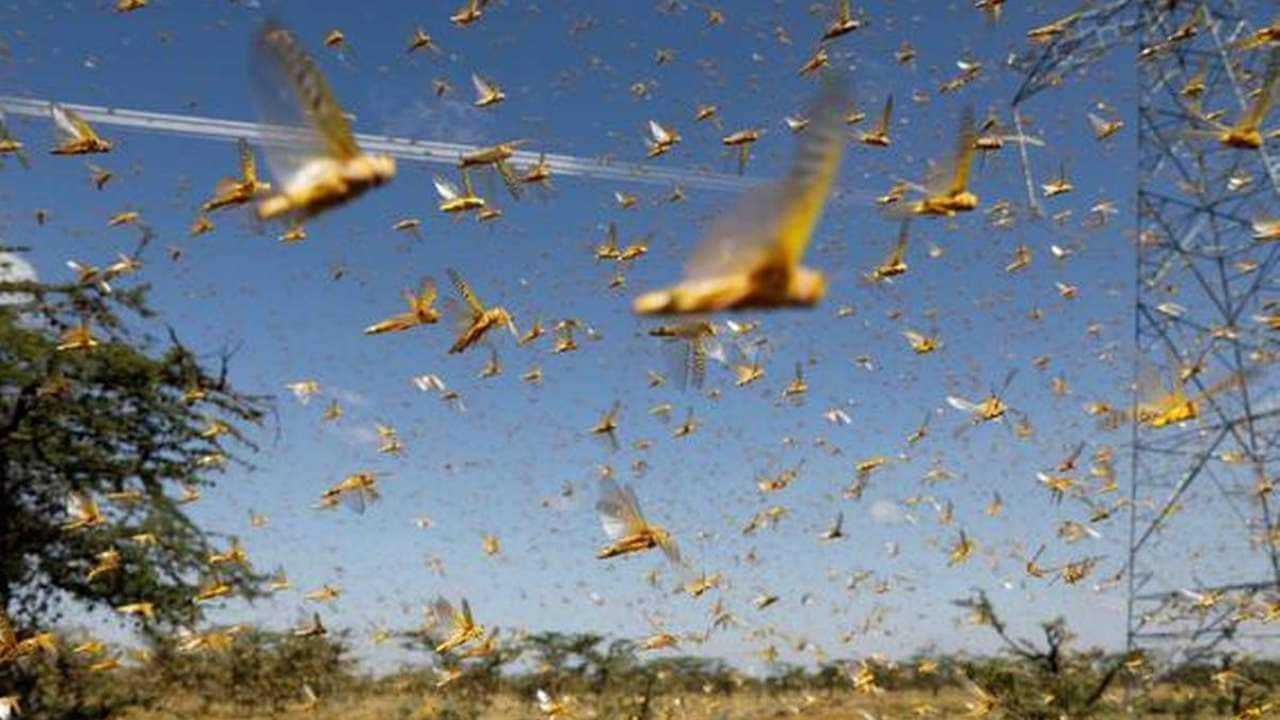 Brood X: Des Milliards De Cigales Vont émerger Après Avoir