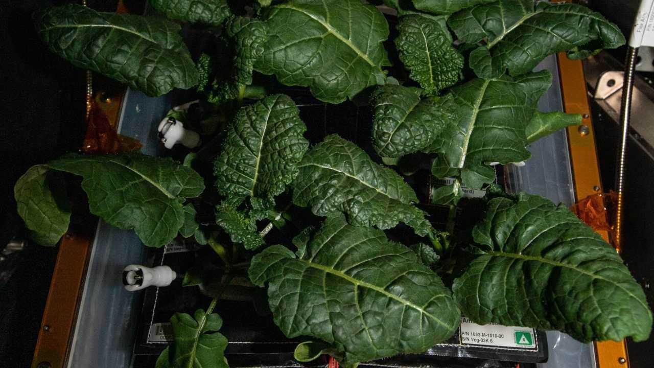 De nouvelles souches de bactéries trouvées sur la station spatiale pourraient aider les astronautes à faire pousser des plantes sur Mars