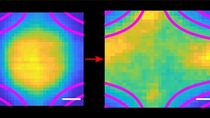 Le plasma se dilate à l'intérieur du champ magnétique
