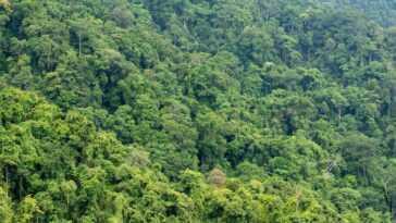 L'Amazonie est vendue via Facebook: des publicités illégales avec des terrains pour déboiser jusqu'à 1000 terrains de football