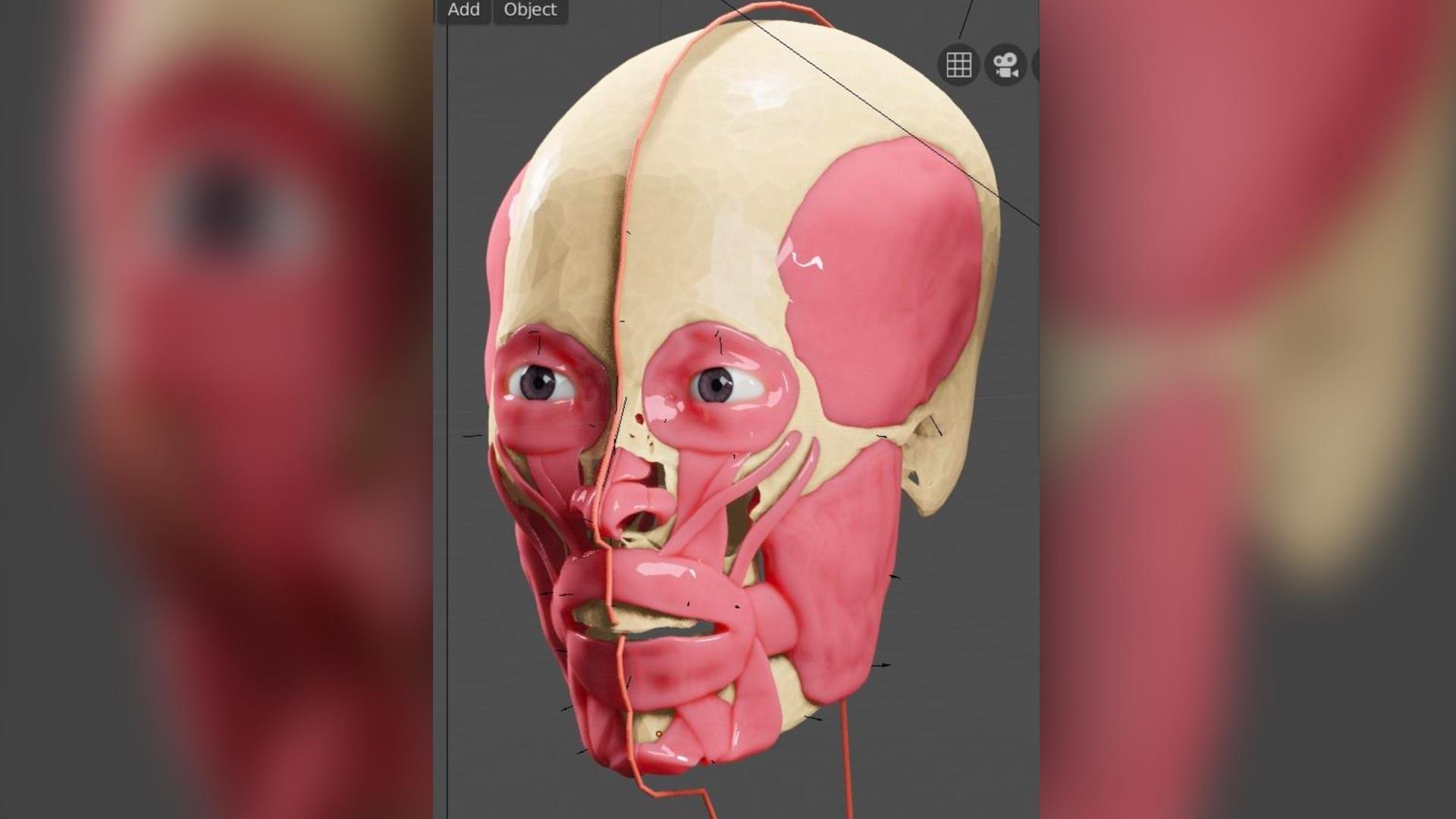 Les muscles faciaux et les ligaments ont été modélisés numériquement sur le crâne du KV 55.