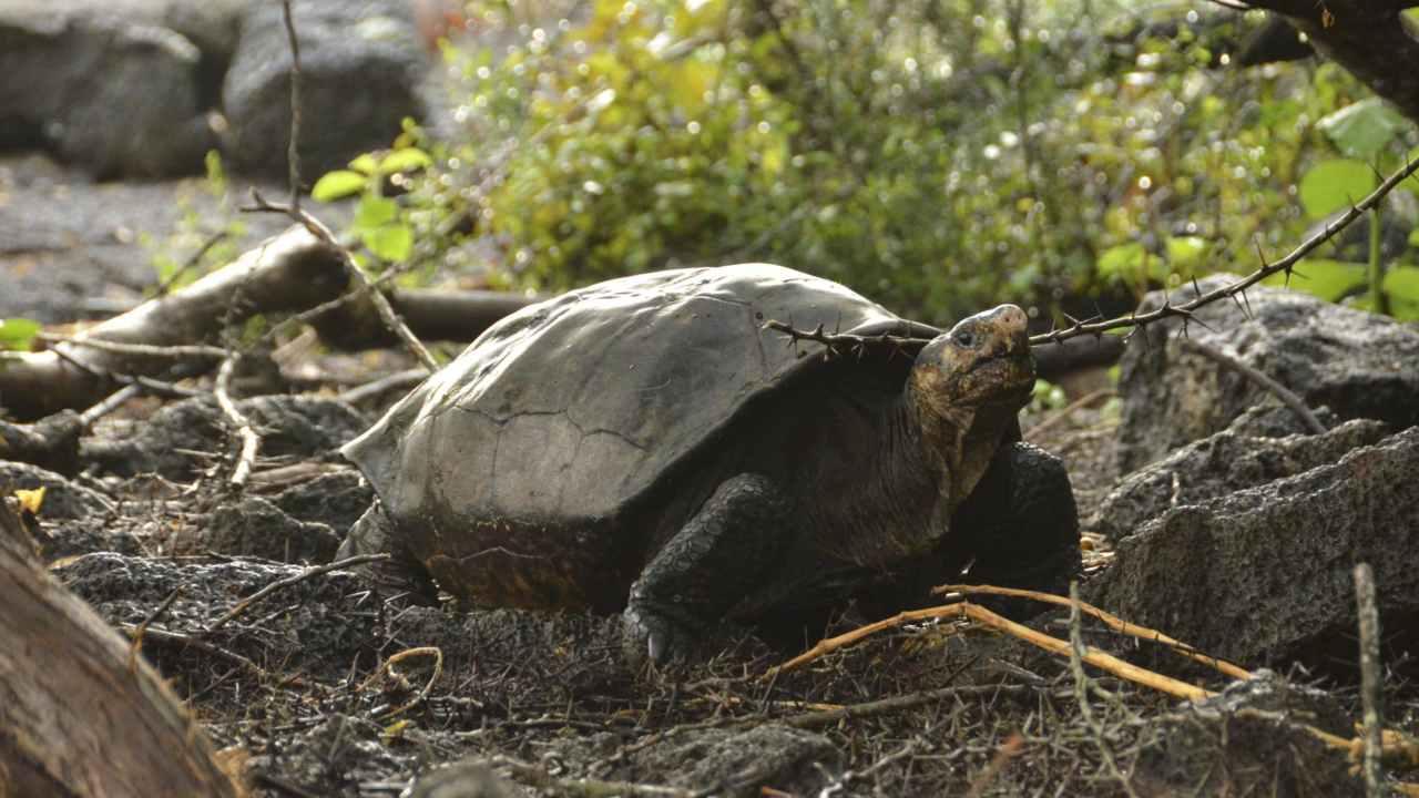 Le personnel de l'aéroport des Galapagos trouve 185 tortues dans une valise lors d'inspections de routine