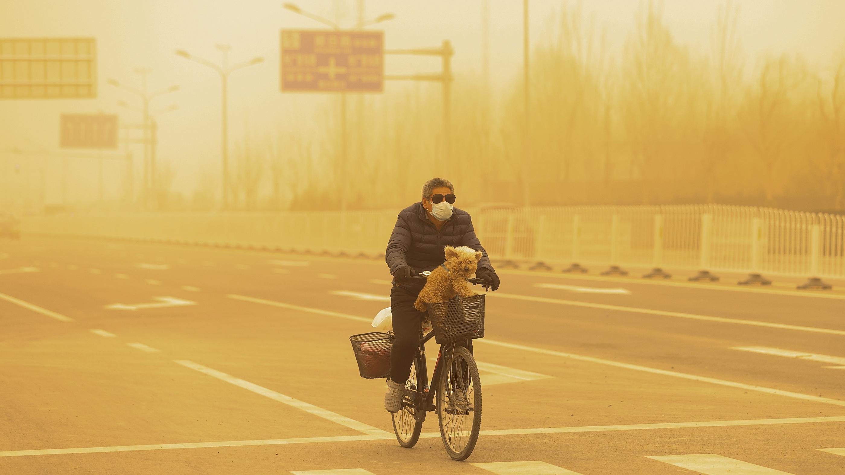 Un homme portant un masque de protection fait des cycles avec son chien pendant la tempête de sable à Beijing, en Chine.