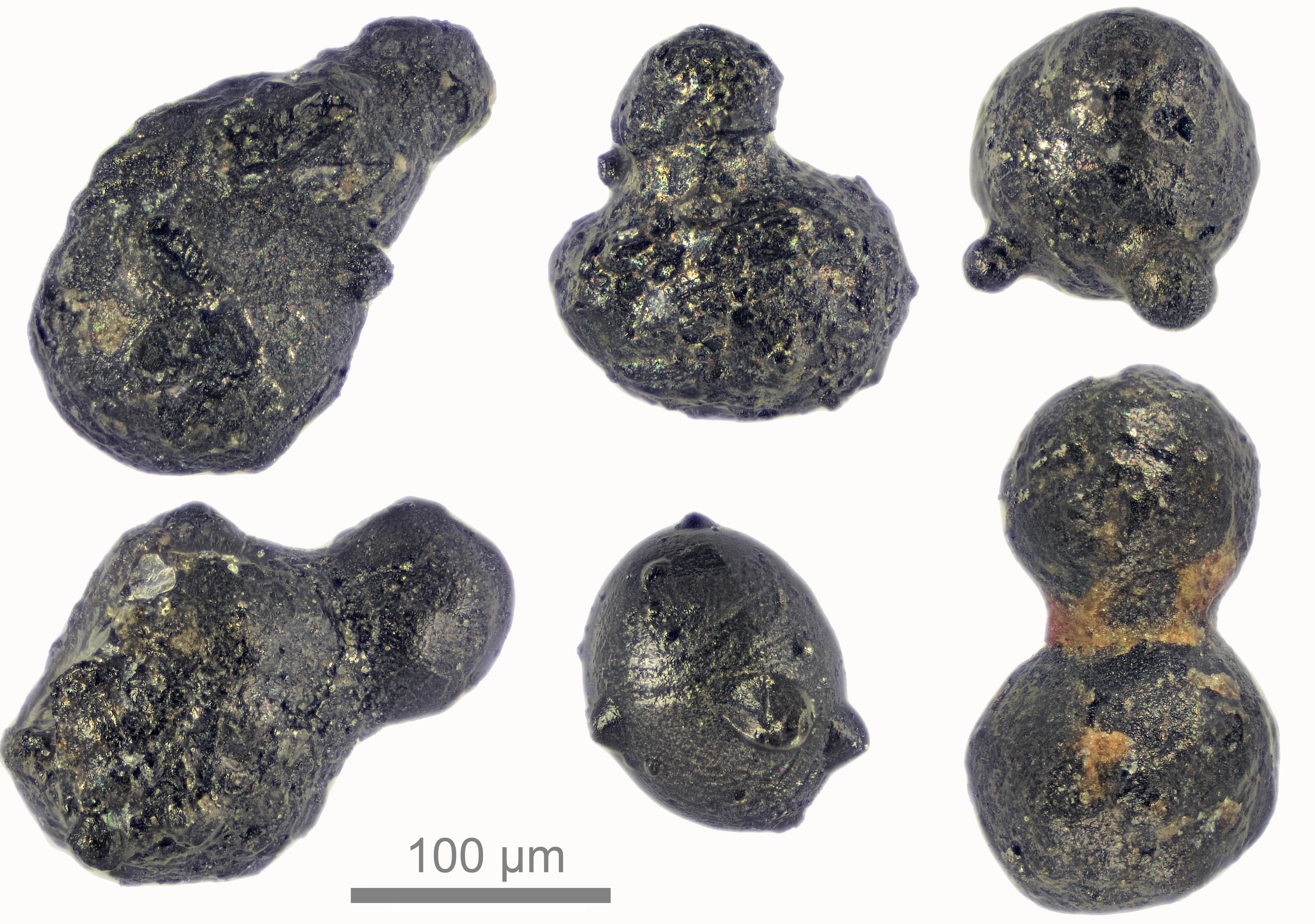 une micrographie de particules d'impact de Walnumfjellet, des montagnes de Sør Rondane, de la terre de la reine Maud, de l'Antarctique de l'Est - les particules semblent noires et brillantes et ont des formes arrondies et grumeleuses