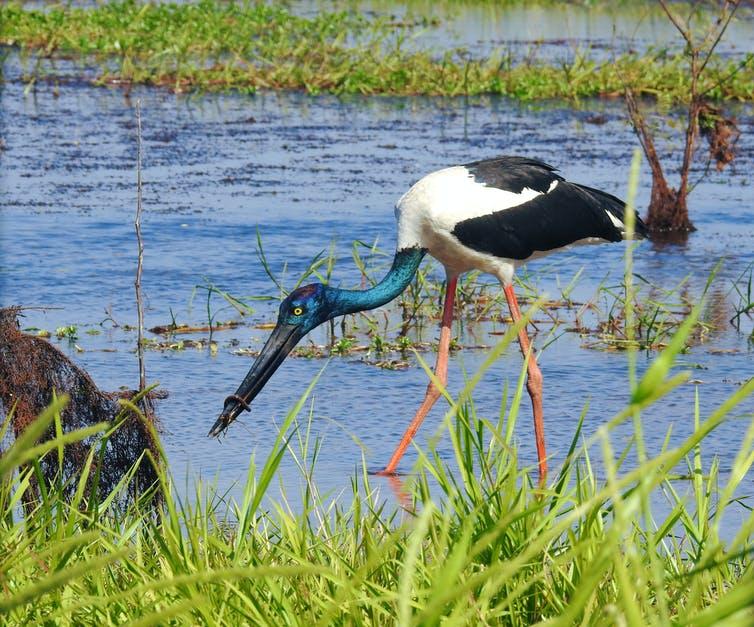 Les zones humides, y compris les mangroves, font partie de nos écosystèmes les plus précieux.