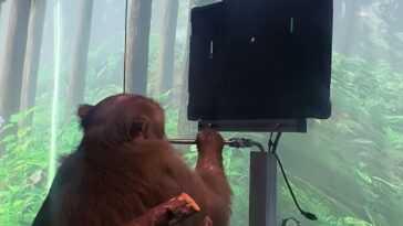 Neuralink effectue une démonstration impressionnante de jeu de ping-pong avec un singe