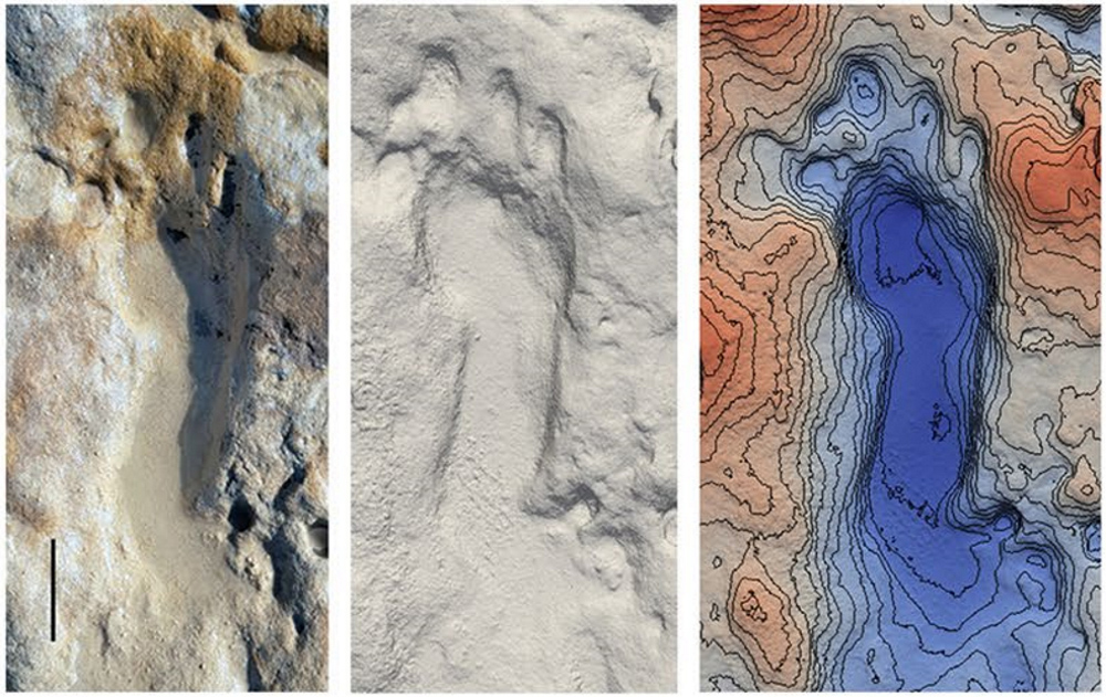 L'équipe scientifique estime que les empreintes fossilisées ont été faites par un groupe de 36 Néandertaliens comprenant 11 enfants - dont certains semblent avoir joué dans du sable qui est devenu une roche sédimentaire.