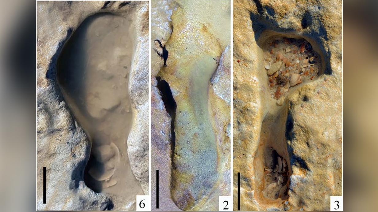 On pense que les empreintes fossilisées découvertes sur une plage du sud de l'Espagne remontent à plus de 100 000 ans et pourraient être les plus anciennes empreintes néandertaliennes découvertes en Europe.