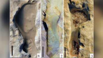 Des Empreintes De Pas De Néandertal Vieilles De 100000 Ans