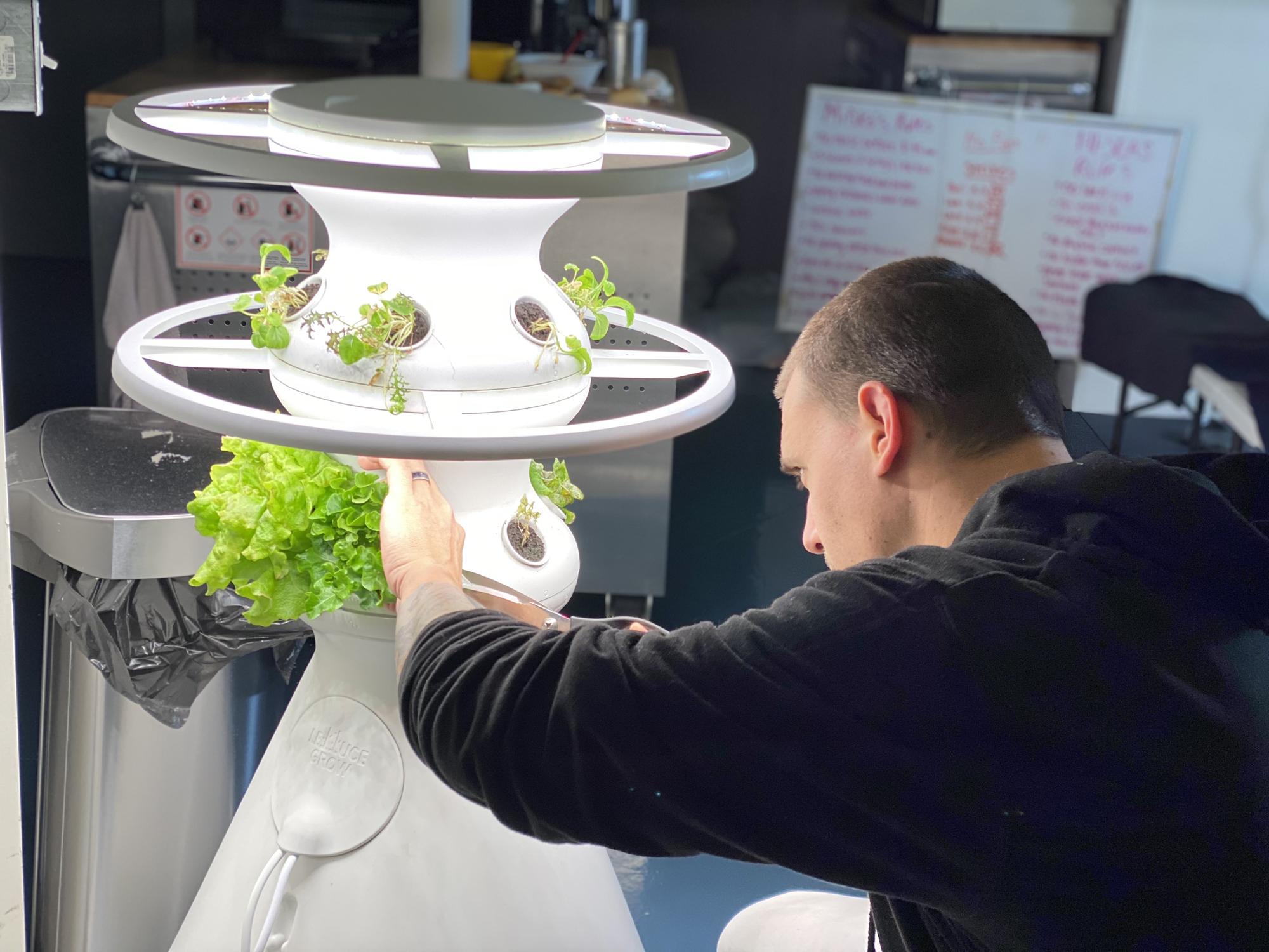 L'agent des biosciences Jason Fischer récolte de la laitue dans une serre hydroponique de laitue Grow à HI-SEAS.