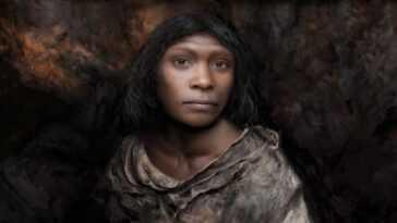 Une Victime Cannibale Préhistorique Retrouvée Dans La Grotte De La