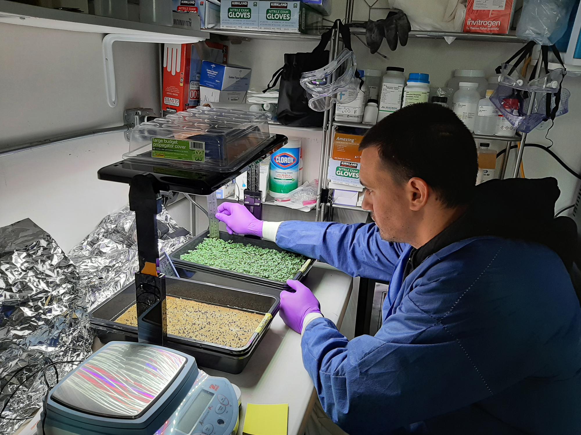L'agent de biosciences Jason Fischer prépare les microgreens pour la récolte à partir de son expérience de système de survie bio-régénératrice.