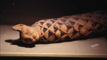 Pourquoi Les Anciens Egyptiens étaient Ils Obsédés Par Les Chats?