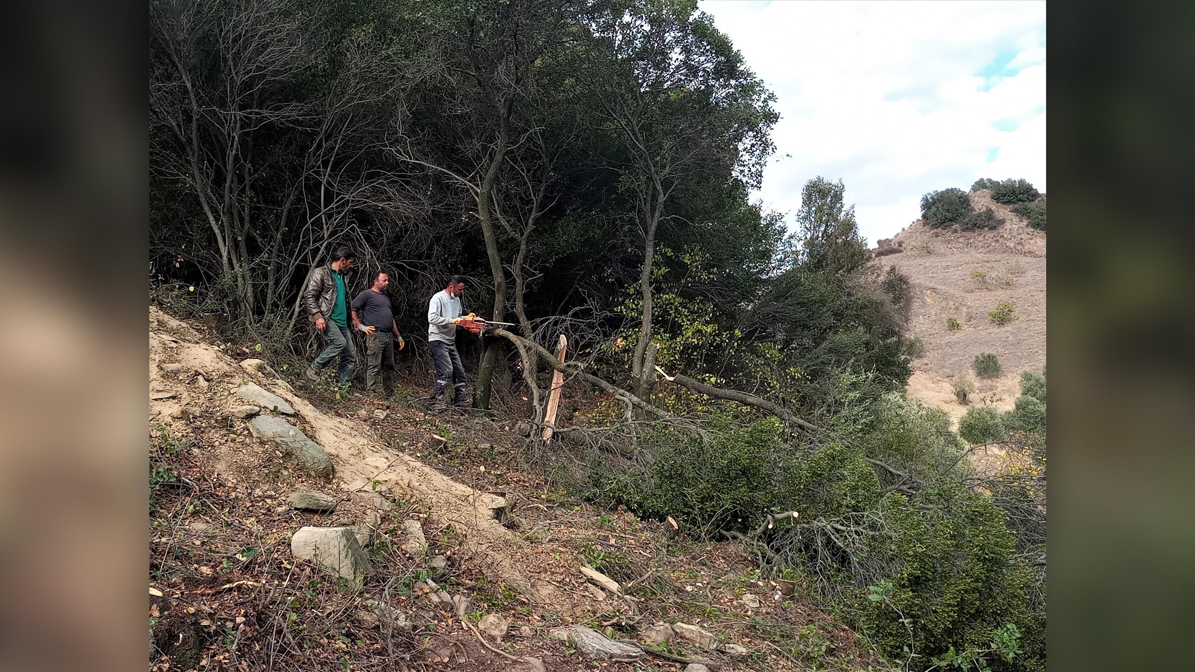 Les arbres ont été abattus afin que les archéologues puissent étudier correctement la région.