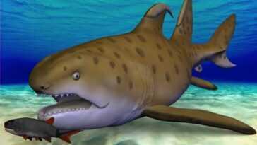 Un `` Requin Godzilla '' Vieux De 300 Millions D'années