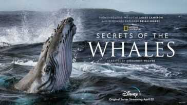 Exclusif: Brian Skerry, Créateur De `` Secrets Of The Whales