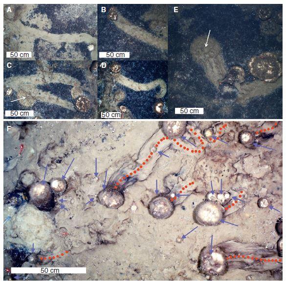 Une figure du document de recherche montre des traînées typiques d'éponges d'éponges.
