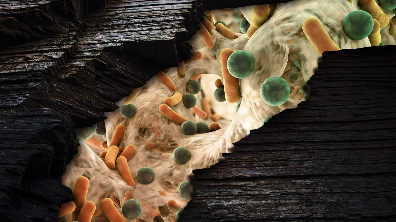 Nous - avec les plantes et les animaux - ne pouvons pas survivre sans nos partenaires microbiens.