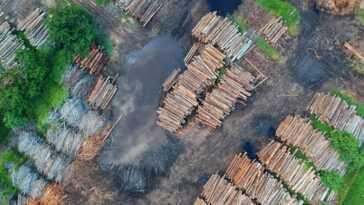 La grande fièvre du bois: ses prix sont montés en flèche et il n'y en a pas pour tout le monde