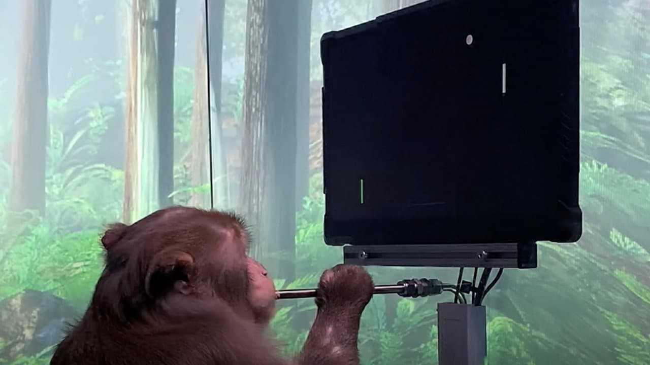 La startup Neuralink, soutenue par Elon Musk, publie un clip d'un singe jouant à un jeu vidéo appelé Pong avec son cerveau
