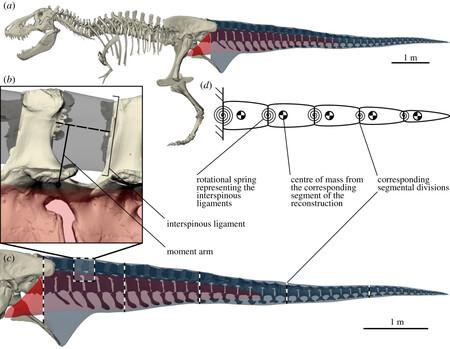 Tyrannosaurys 01