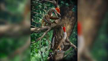 Le Minuscule Jurassic 'monkeydactyl' A La Plus Ancienne Paire De