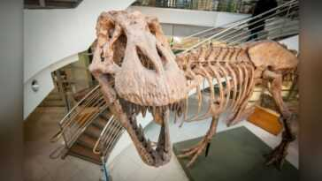 Pas Moins De 2,5 Milliards De Tyrannosaurus Rex Ont Jadis