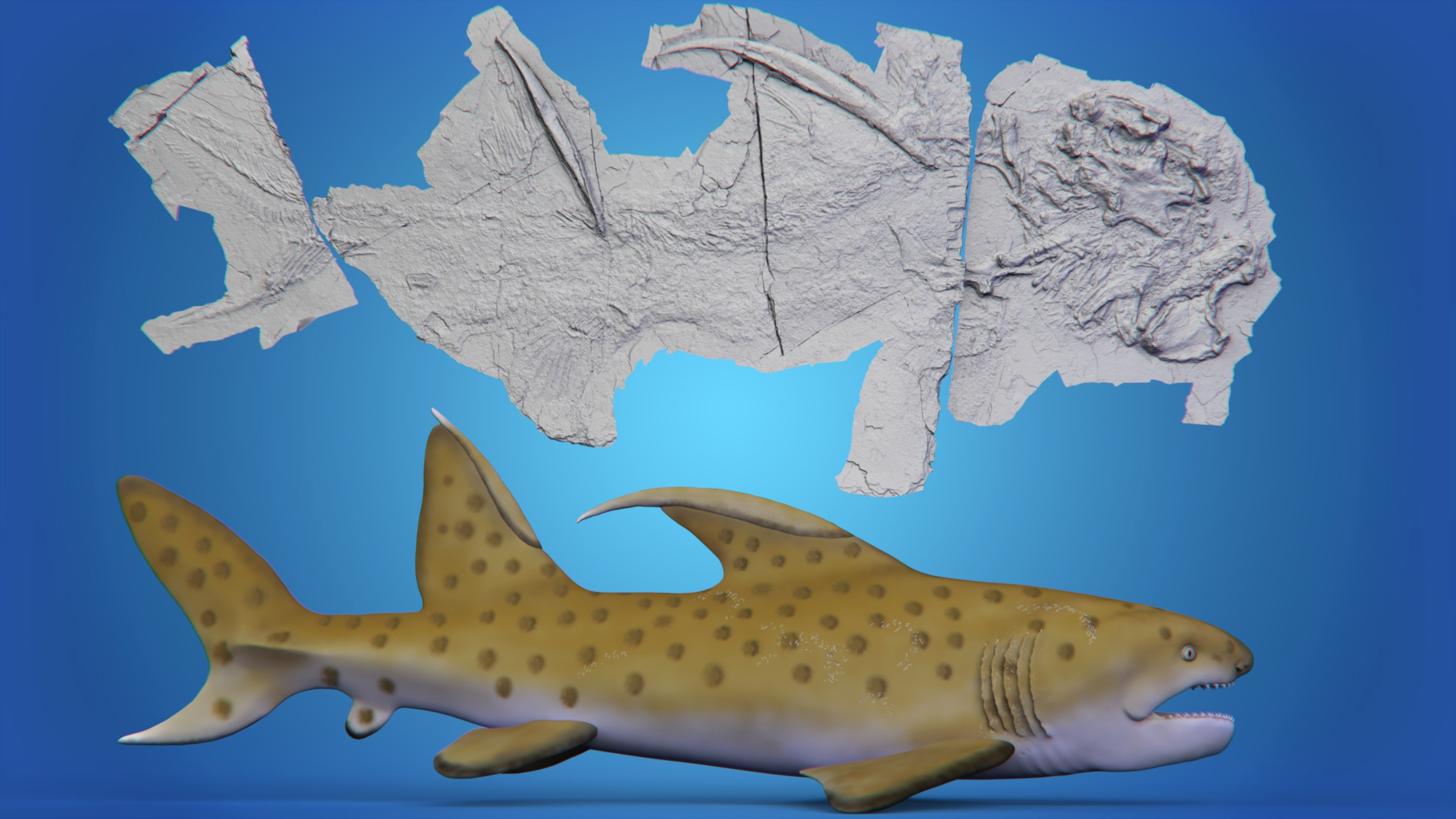 Le squelette fossilisé du `` requin Godzilla '' à côté du rendu d'un artiste de ce à quoi il aurait pu ressembler.