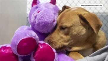 Une publicité d'adoption brutalement honnête et hilarante pour `` Chihuahua démoniaque '' devient virale