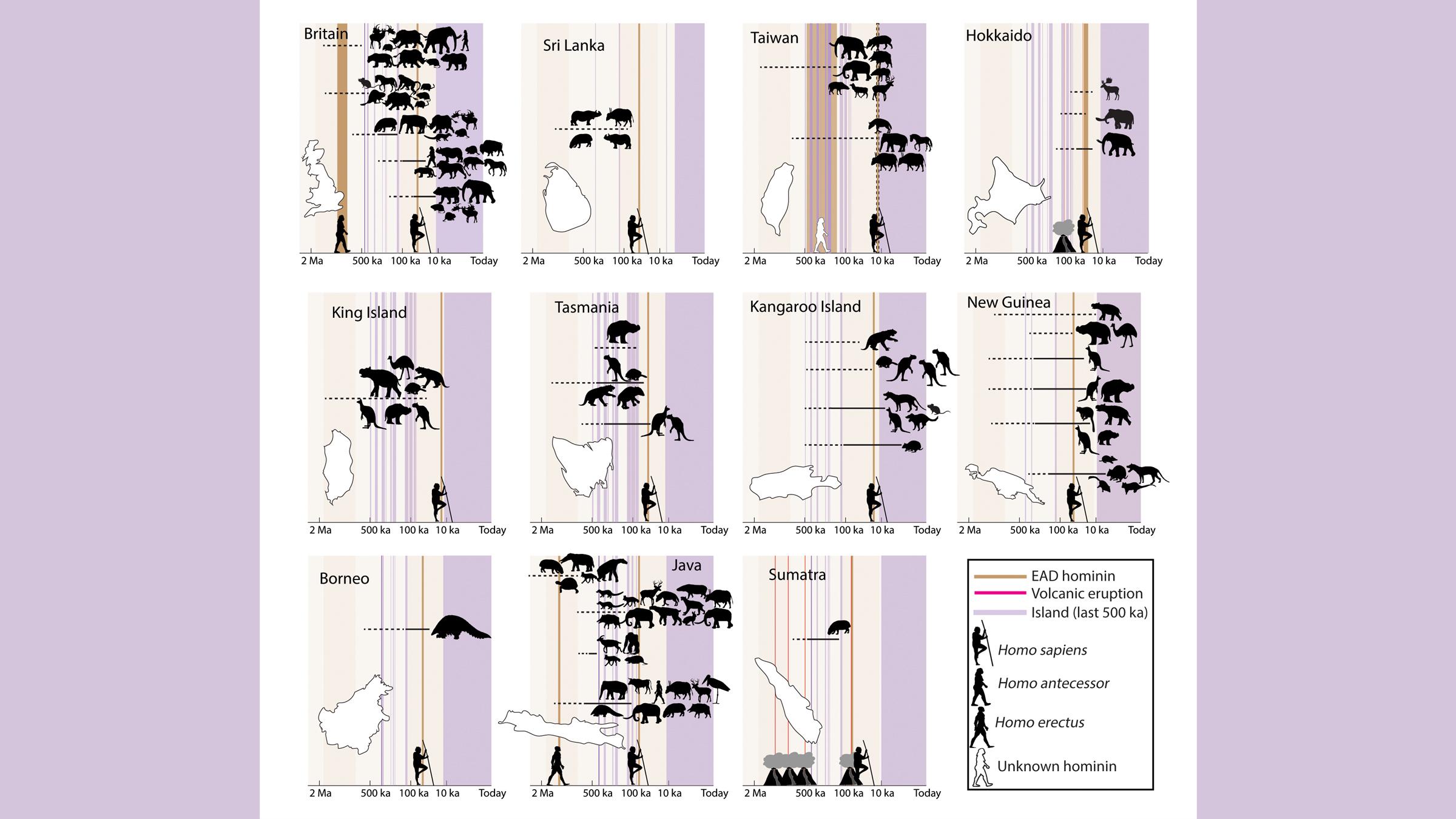 Une chronologie d'extinction montrant le moment où les animaux ont disparu par rapport à l'arrivée des hominins et des Homo sapiens sur les îles continentales.  Les barres verticales violettes indiquent quand ces masses continentales étaient des îles.  Les dates de la dernière apparition (DAL) des animaux disparus sont indiquées en lignes horizontales, avec des lignes pointillées marquant l'incertitude.  EAD, première date d'apparition.
