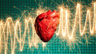 Les Autres Animaux Ont Ils Des Crises Cardiaques?