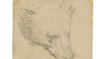 Da Vinci `` Head Of A Bear '' Pourrait Se
