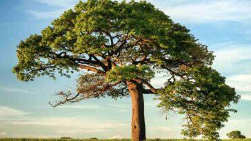 Depuis 1960, Le Couvert Forestier De La Terre A Diminué