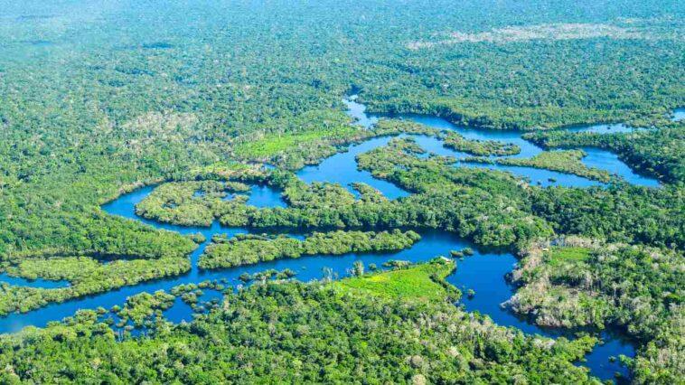 La Forêt Amazonienne Du Brésil A émis Plus De Co2