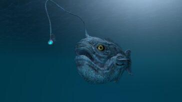Un Poisson De Haute Mer Avec Une Ampoule Sur La
