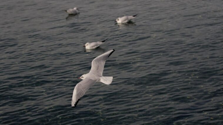 Journée Mondiale Des Océans 2021: Les Oiseaux De Mer Agissent