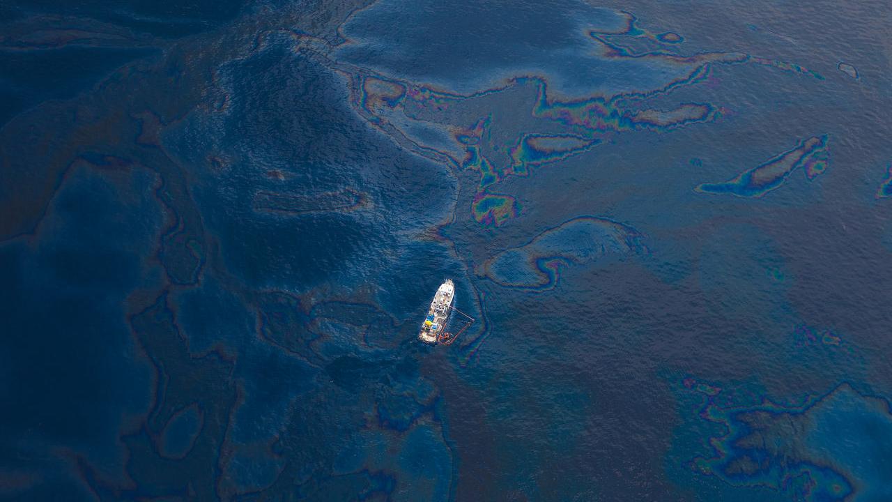 Les toxines ont blessé ou tué des centaines de milliers d'animaux dans les années à venir, mutilant le foie des oiseaux de mer, les poumons des dauphins et, pense-t-on, la peau des poissons.  Crédit image : Wikipédia