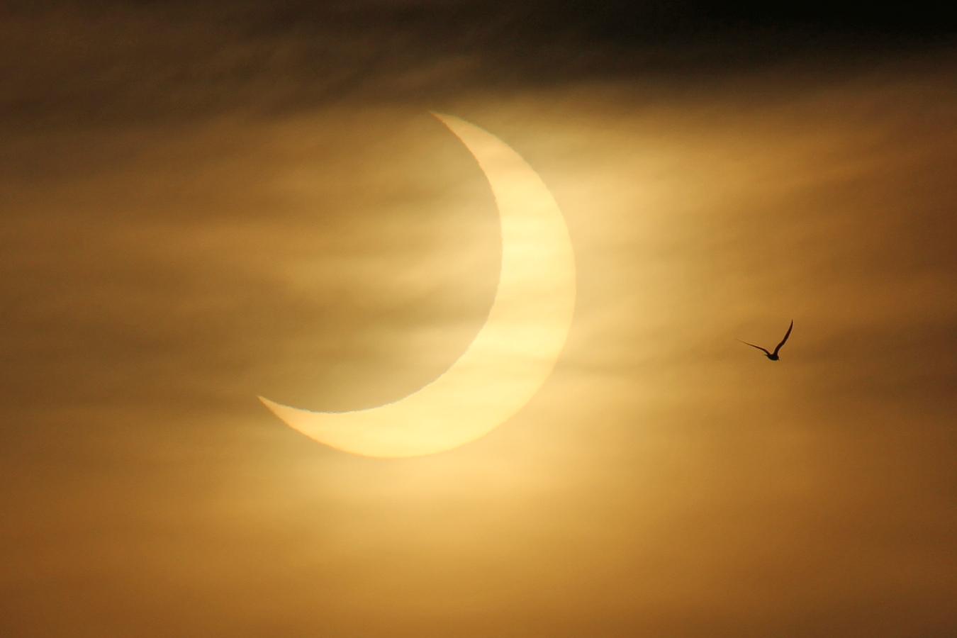 Une mouette vole devant le soleil partiellement éclipsé sur cette superbe photo des photographes Imelda Joson et Edwin Aguirre au Black Falcon Cruise Ship Terminal à Boston le 10 juin 2021.