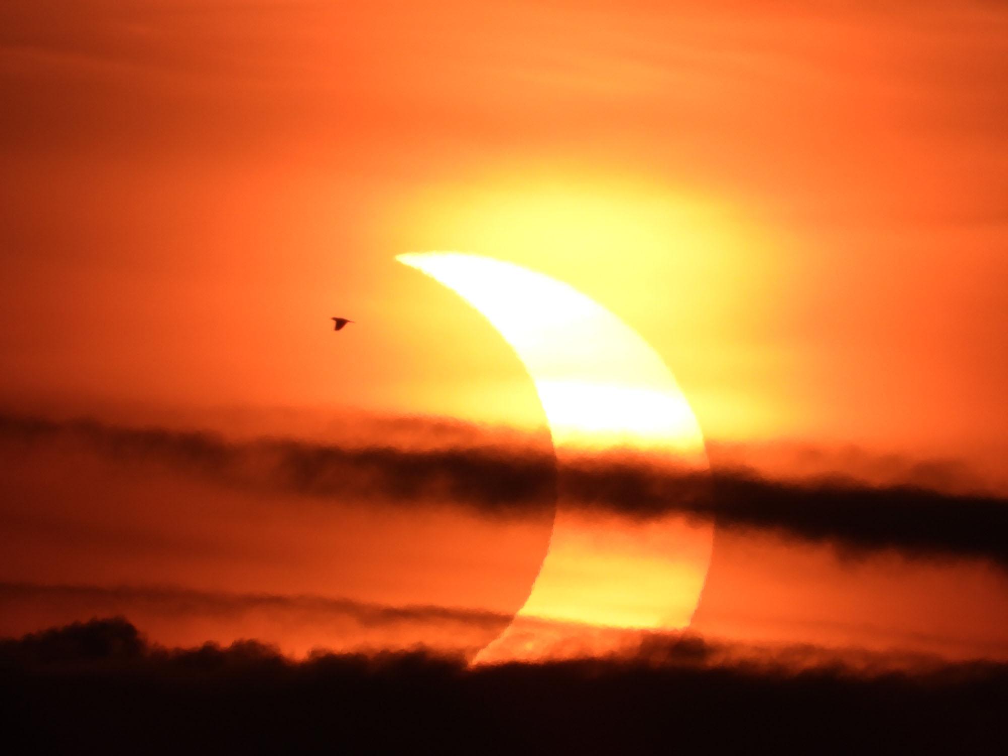 Un croissant de soleil culmine à travers les nuages alors qu'un oiseau survole cette superbe photo de l'observateur du ciel James Logue, qui a pris la photo de Jim Thorpe, en Pennsylvanie, lors de l'éclipse solaire partielle du 10 juin 2021.