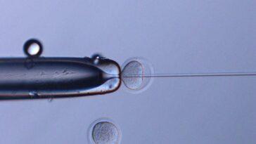 Du Sperme De Souris Congelé Qui A Passé 6 Ans