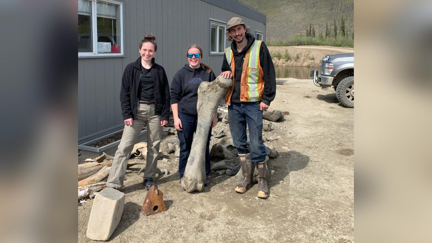 Les membres de l'équipe posent avec certains des os de mammouth trouvés dans la mine Little Flake, près de Dawson City, au Yukon.