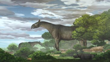 L'ancien Rhinocéros Géant était L'un Des Plus Grands Mammifères à
